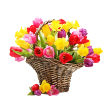 Cos cu lalele si narcise - Florile din Cos Roflora